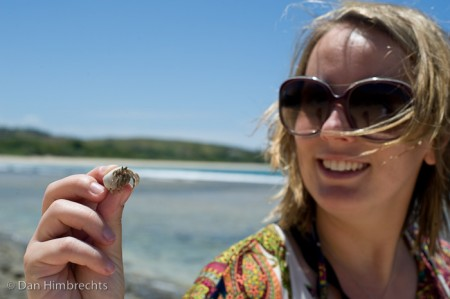 Hermit crab, Natadola beach, Fiji